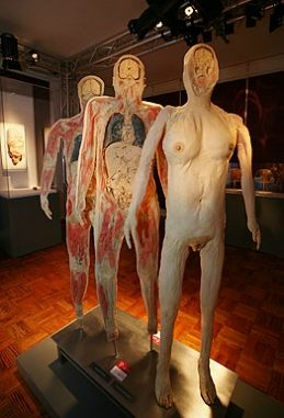 Exposicao Corpo Humano Bodies Chineses Polimero
