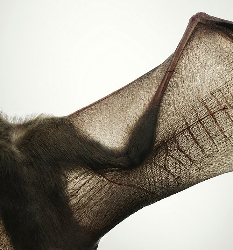 animals photography tim flach