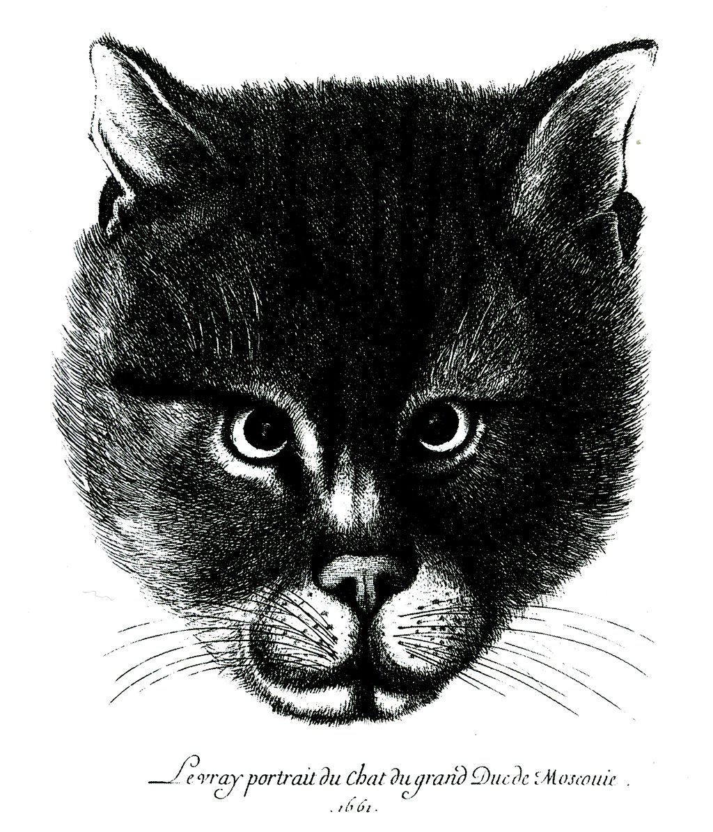 The cat of Tsar Alexis of Russia 1661.jpg