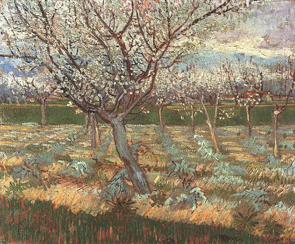 23_apricot_trees_in_blossom_23.jpg