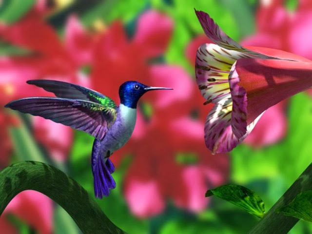 cartelthemes.com_hummingbird-wallpaper-42622-hd-wallpapers-background.jpg