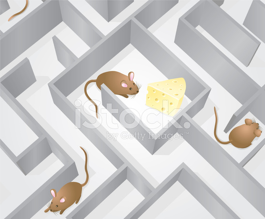 12693489-mice-maze-cheese-found.jpg