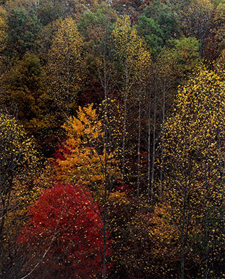 Colorful Trees, Newfound Gap Road, Great Smokey Mountains National Park, Tennessee, 1967