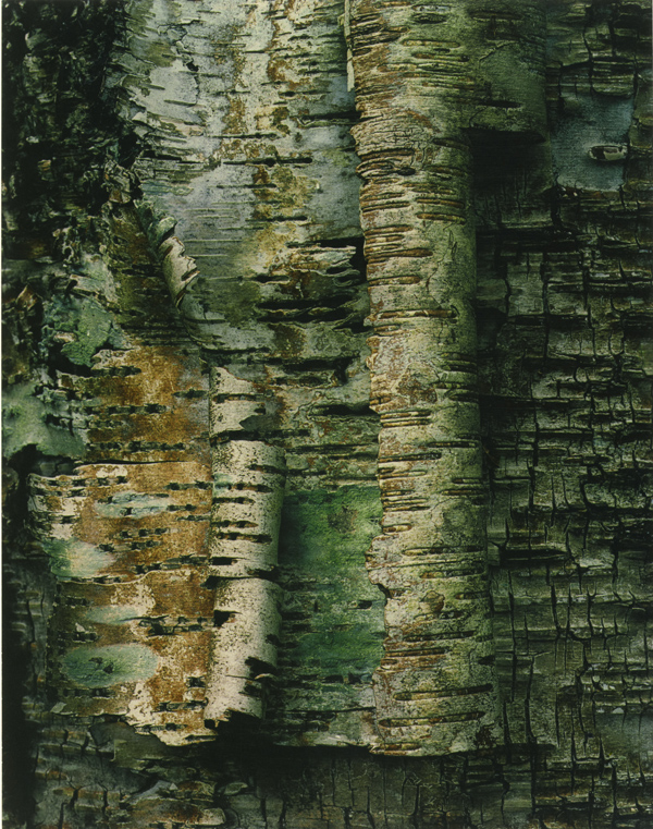 """Peeling Birch Bark"" 1969"