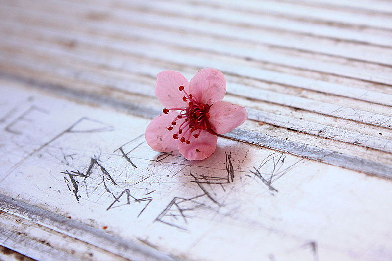 http://obviousmag.org/mar_me_quer/2015/03/12/Free_Unedited_Pretty_Little_Pink_Flower_on_The_Scratched_Park_Picnic_Table_Creative_Commons_%283457443391%29.jpg