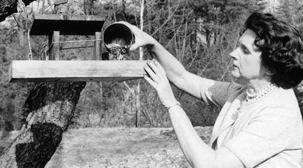 Rachel_Carson_Feeds_Birds_Environmentalist_Activist_author.png