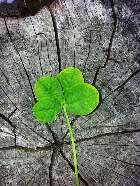four-leaf-clover-978544_640.jpg