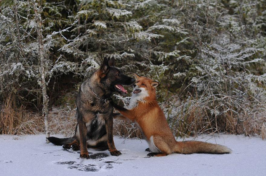 The Fox And The Dog13.jpg