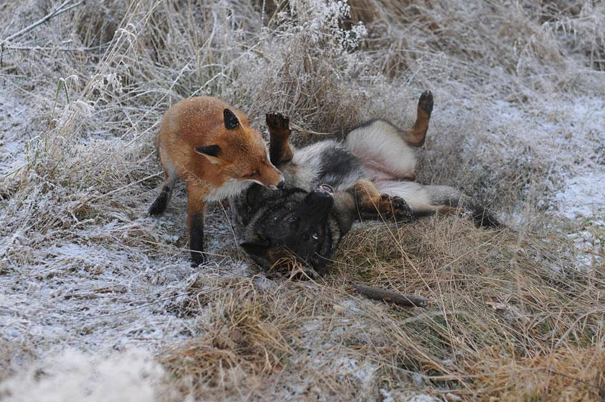 The Fox And The Dog5.jpg