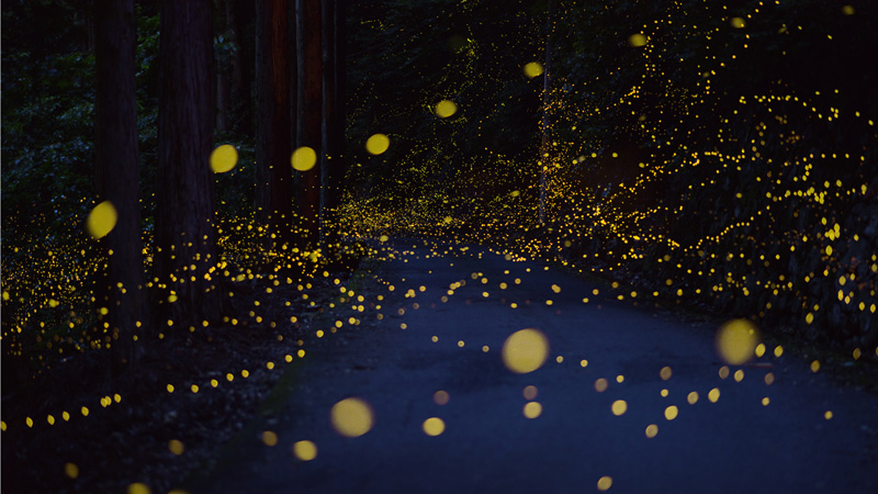 long-exposure-photos-of-fireflies-at-night-tsuneaki-hiramatsu-1.jpg