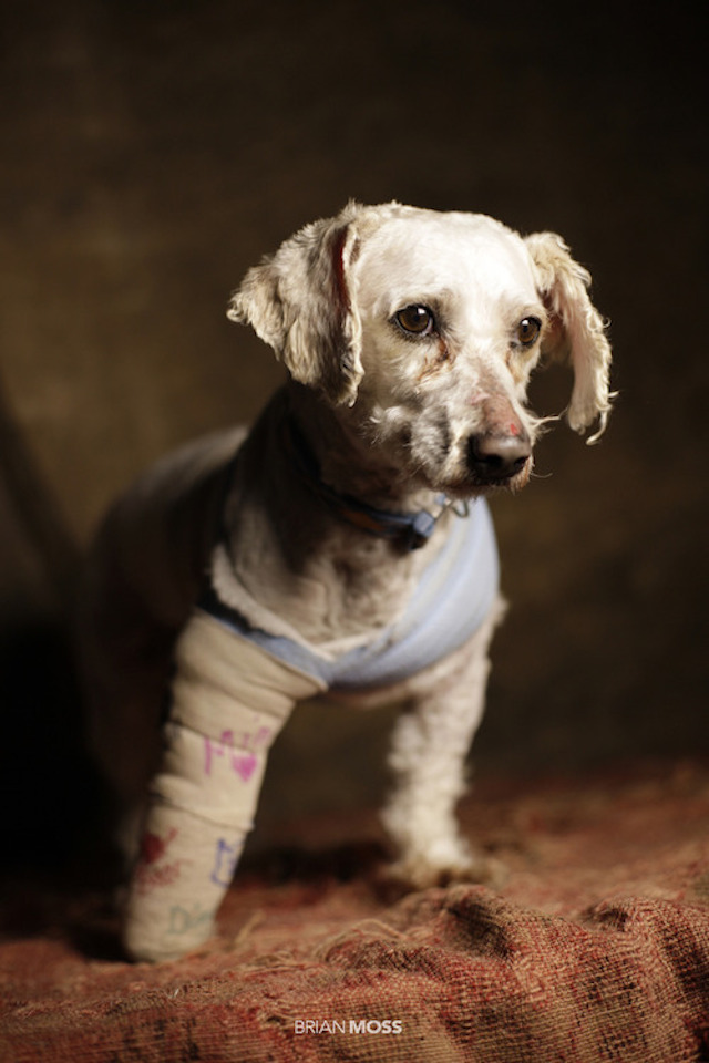 Rescue-Me-Puppy-With-Cast.jpg
