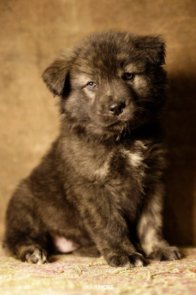 Rescue-Me-Teddy-Bear-Puppy.jpg