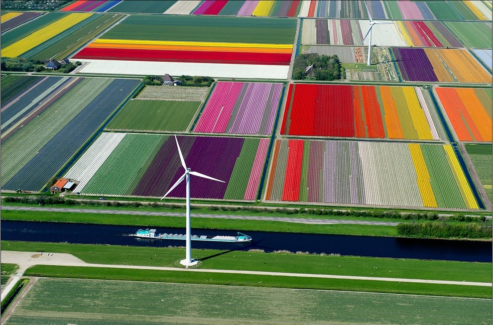 Tulip Fields in Spoorbuurt- North Holland- Netherlands.jpg