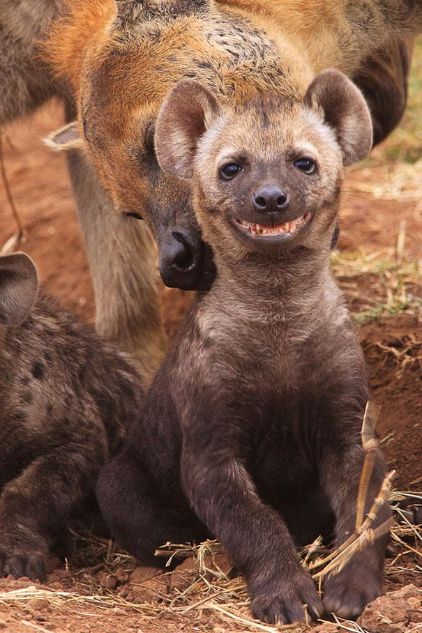 Happiest Animals In The World14.jpg