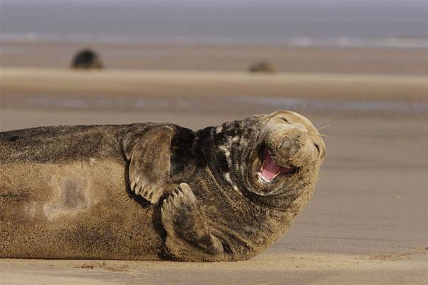 Happiest Animals In The World21.jpg