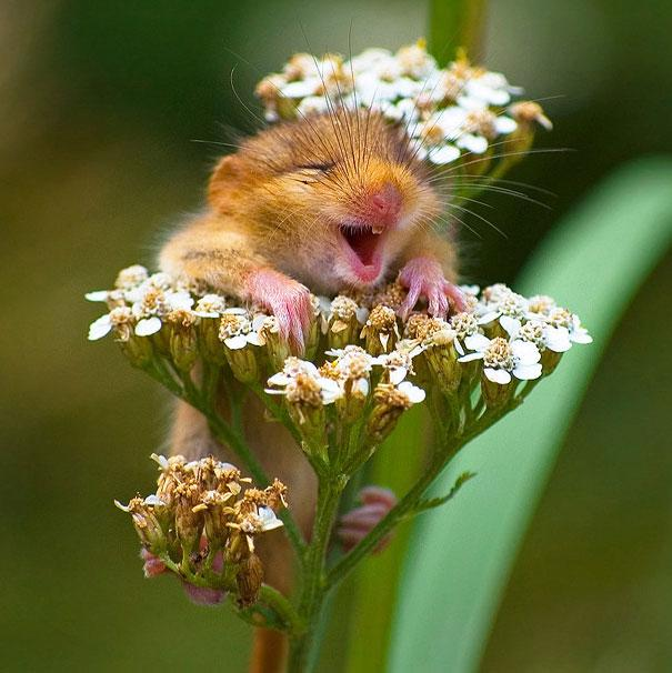 Happiest Animals In The World3.jpg