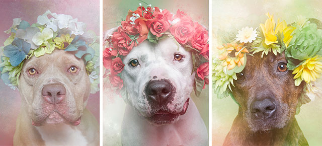 Flower Power Pit Bulls of the Revolution1.jpg