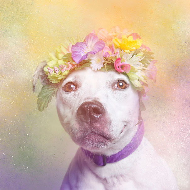 Flower Power Pit Bulls of the Revolution10.jpg