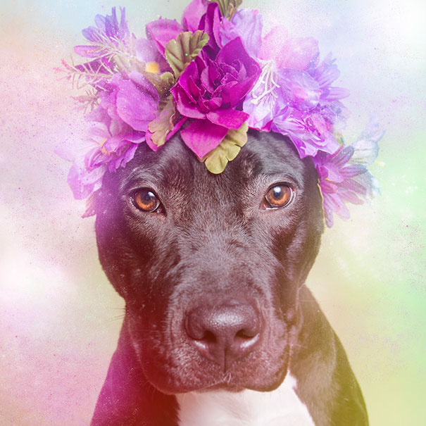 Flower Power Pit Bulls of the Revolution11.jpg