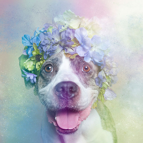 Flower Power Pit Bulls of the Revolution12.jpg