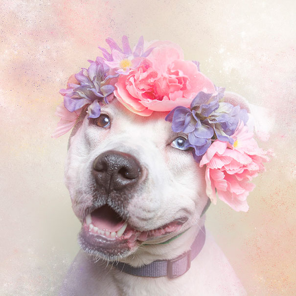 Flower Power Pit Bulls of the Revolution2.jpg
