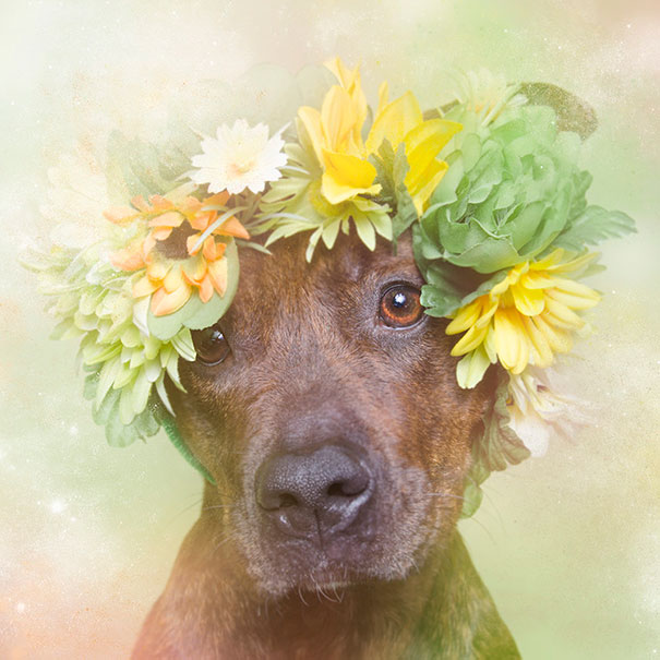 Flower Power Pit Bulls of the Revolution3.jpg