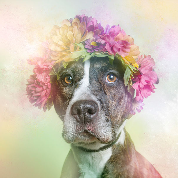 Flower Power Pit Bulls of the Revolution4.jpg
