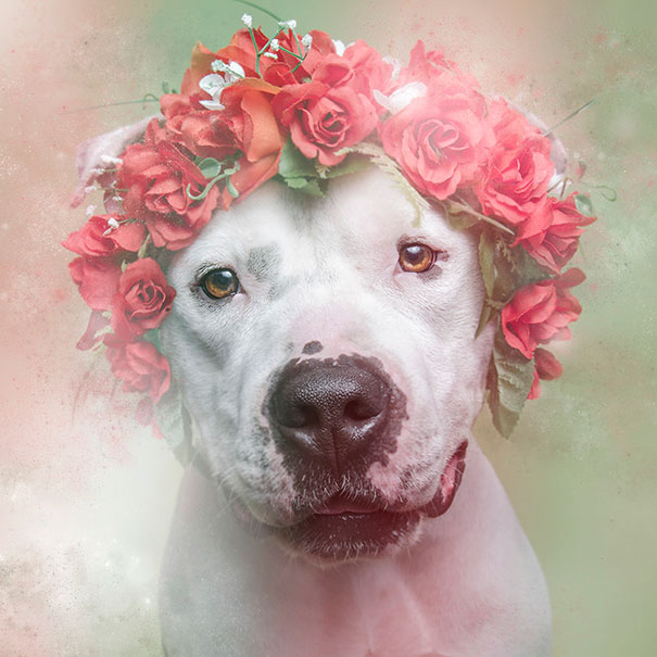 Flower Power Pit Bulls of the Revolution5.jpg