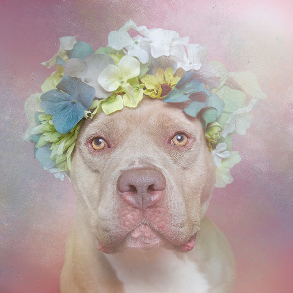 Flower Power Pit Bulls of the Revolution6.jpg