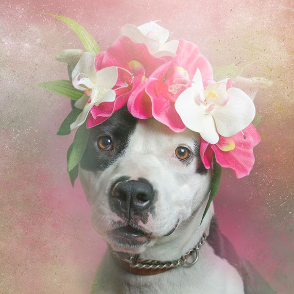Flower Power Pit Bulls of the Revolution7.jpg