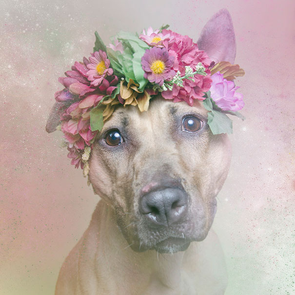 Flower Power Pit Bulls of the Revolution9.jpg
